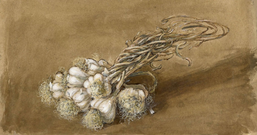 02. Hvitløkbunt I - Bundle of garlic I